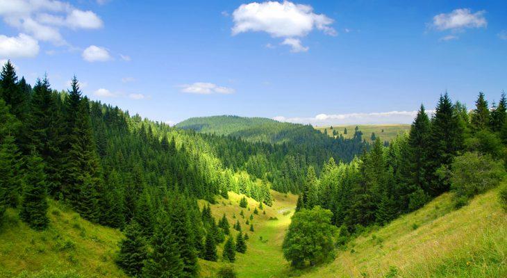 ODRŽIVI RAZVOJ – CILJ BROJ 15 AGENDE ODRŽIVOG RAZVOJA 2030 : Nestankom šuma nestaćemo i mi!